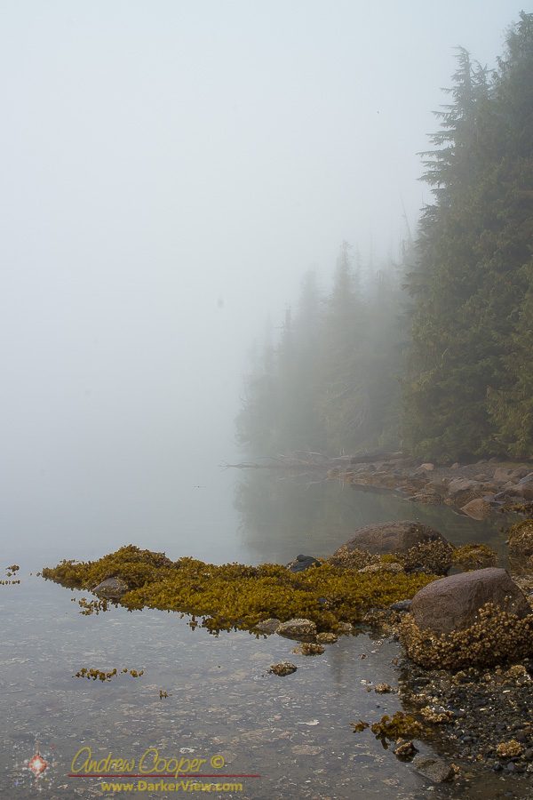 A foggy shoreline in Blundon Harbor
