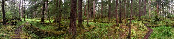 Spruce & Cedar