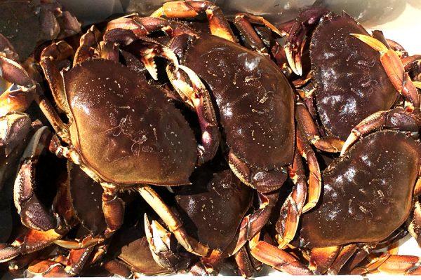 Near Limit on Crab