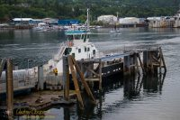 Gravina Island Ferry